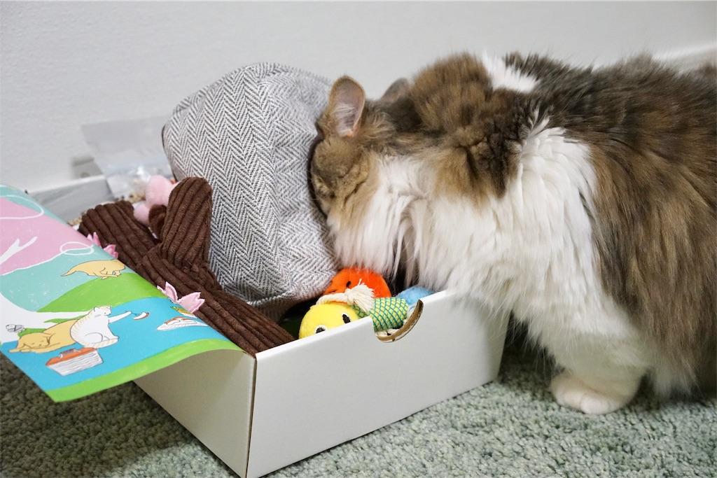 おもちゃに顔を突っ込む猫