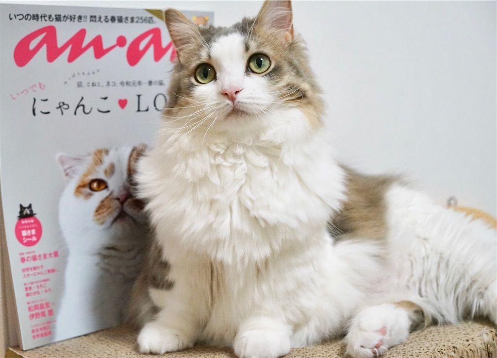 anan No. 2150 にゃんこLOVEと愛猫リリー