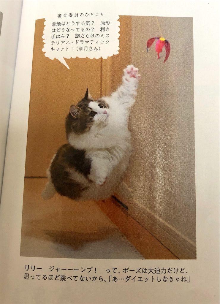 anan No. 2150 にゃんこLOVE掲載写真