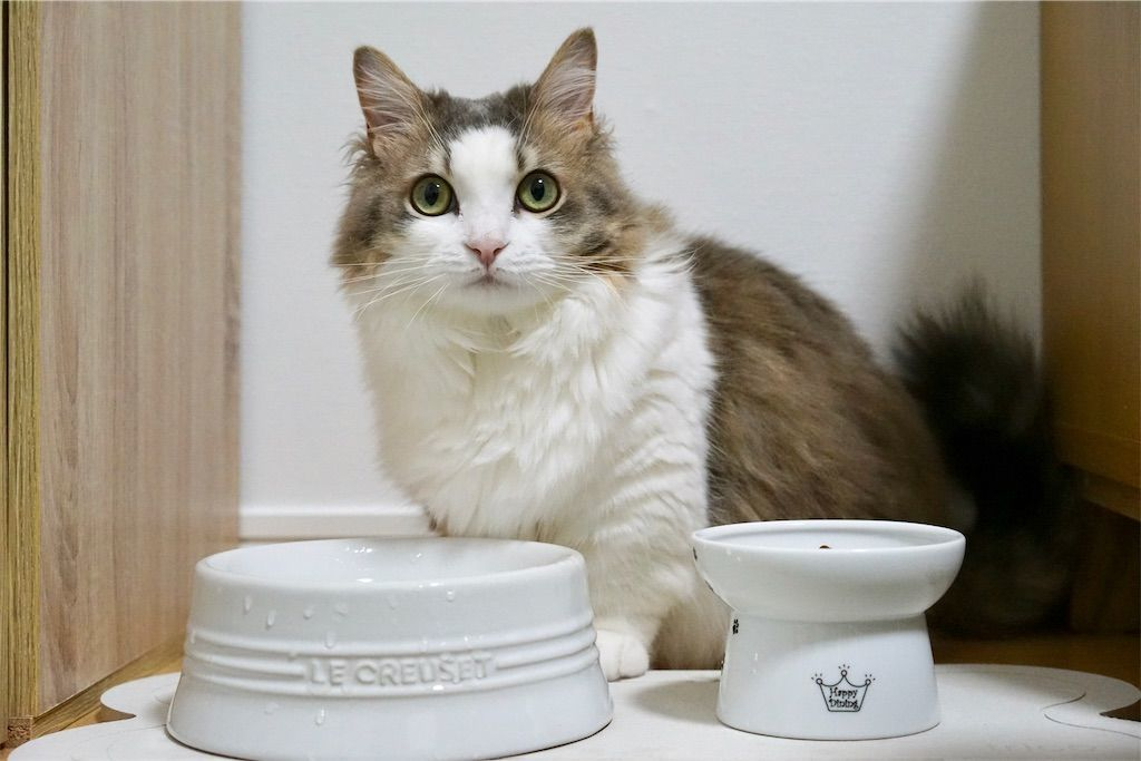 猫と水飲み場