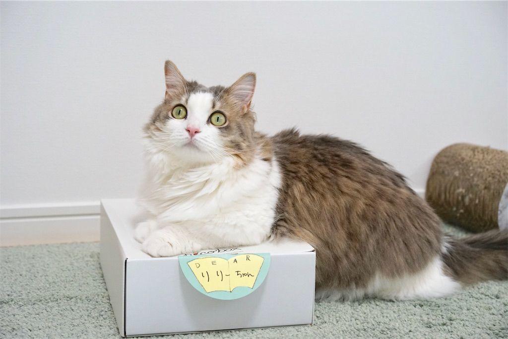 PECOBOX(ペコボックス)に乗る猫