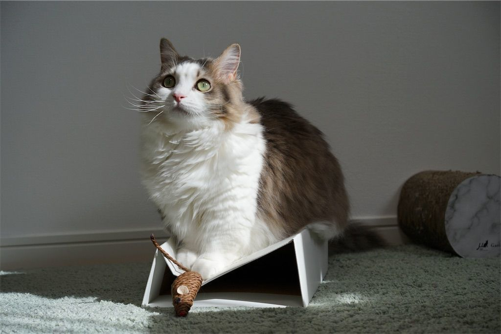 ネズミのオモチャで遊ぶ猫2