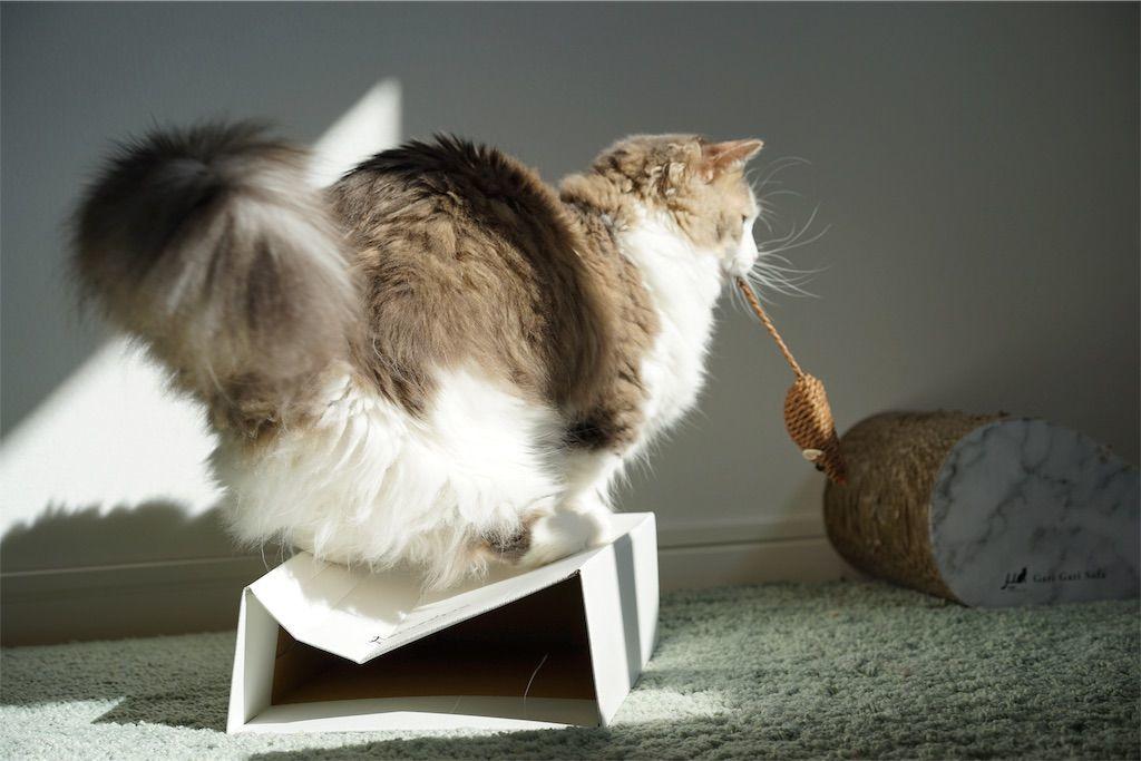 ネズミのオモチャで遊ぶ猫3