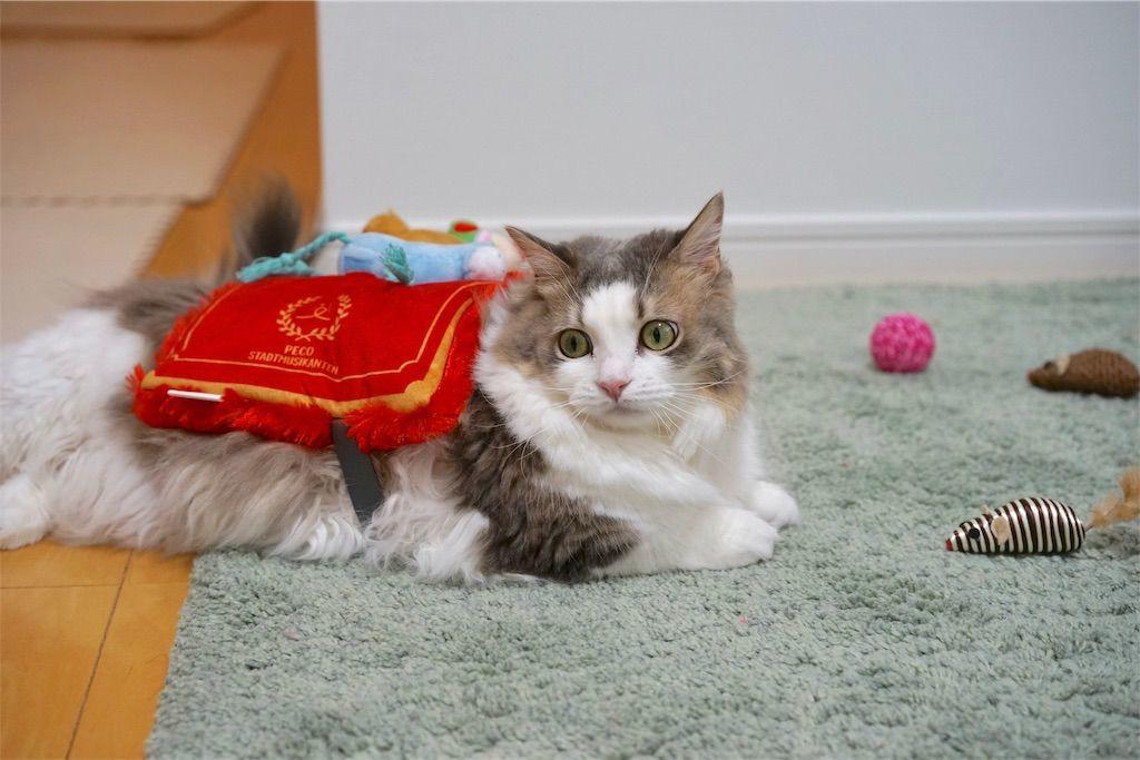 ブレーメンの音楽隊になる猫1