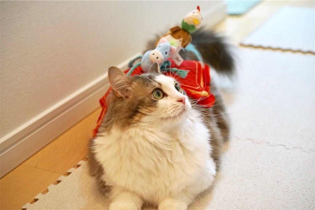 ブレーメンの音楽隊になる猫2
