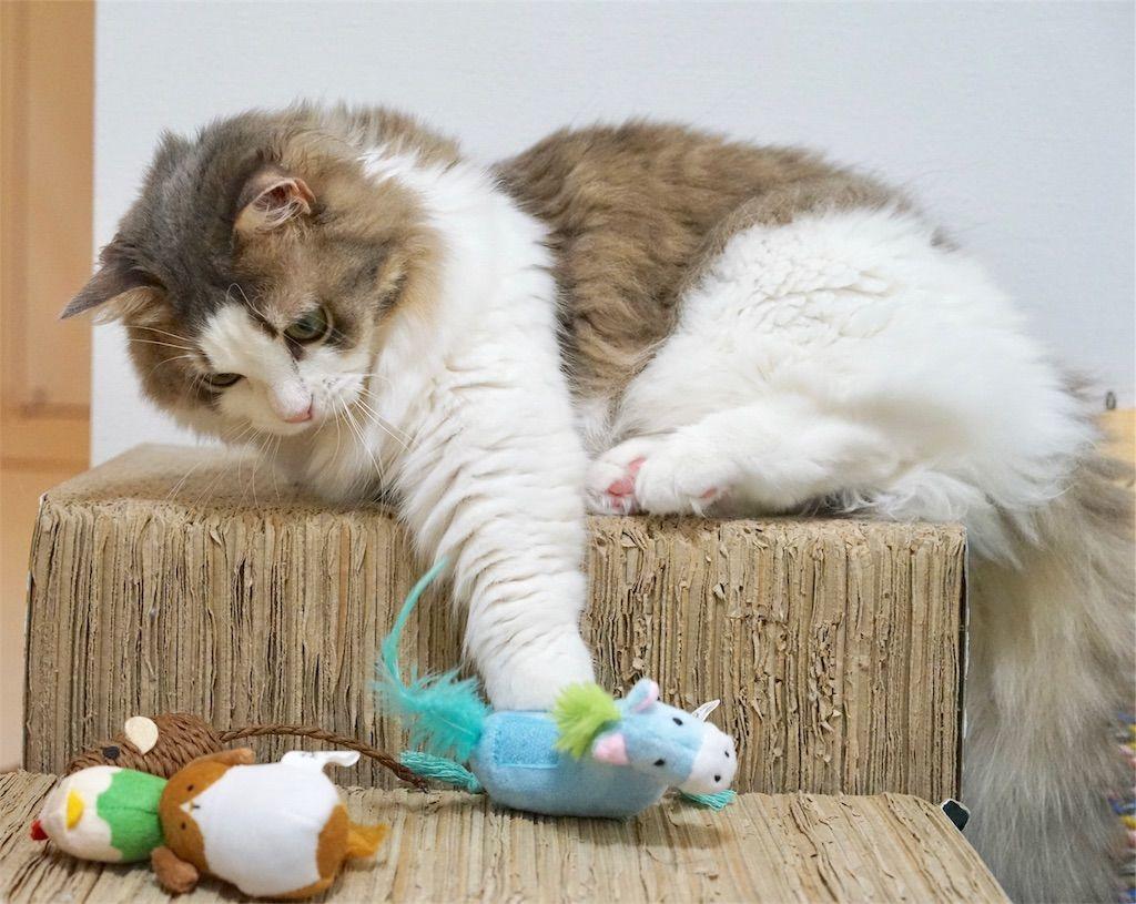 つみぐるみシリーズ ちからもちロバに手を伸ばす猫