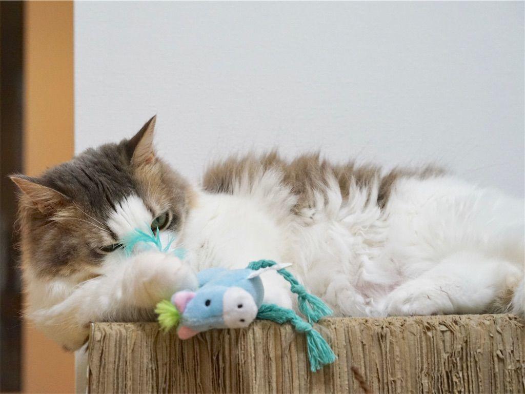 つみぐるみシリーズ ちからもちロバで遊ぶ猫