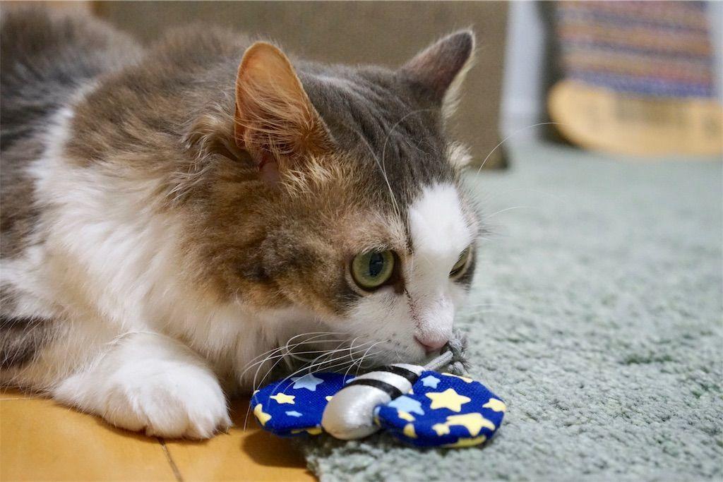 蝶のおもちゃと猫1