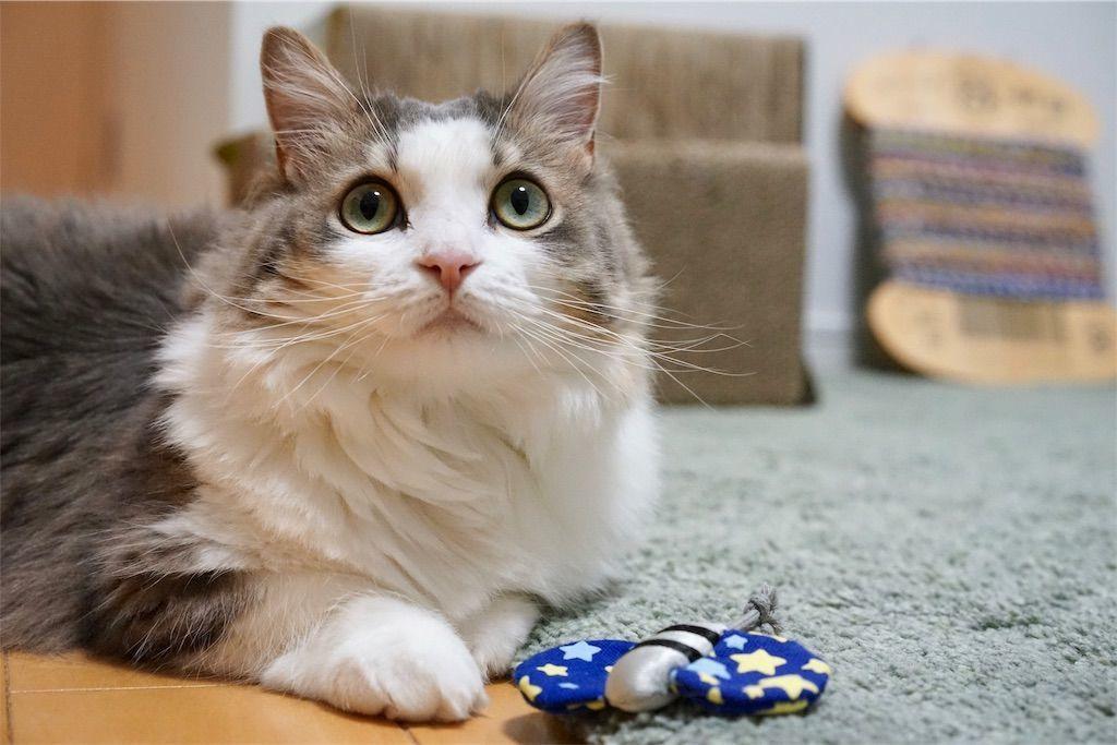 蝶のおもちゃと猫2