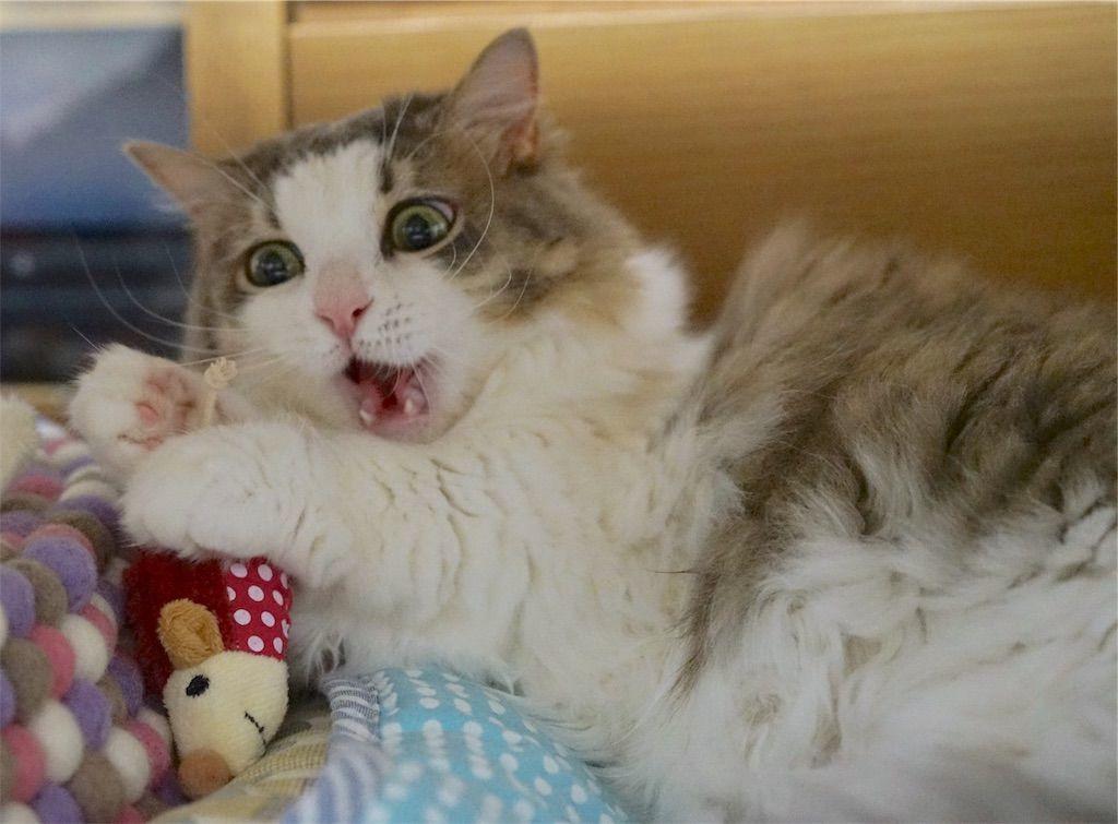 ハンター キャットトイ マモウ マウスで遊ぶ猫2