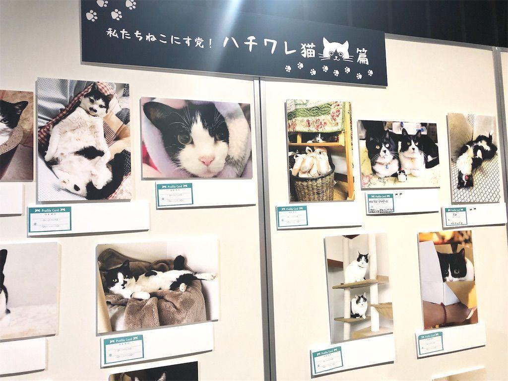 ねこにすと9写真パネル ハチワレ猫篇