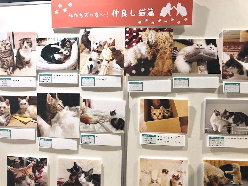 ねこにすと9写真パネル 仲良し猫篇