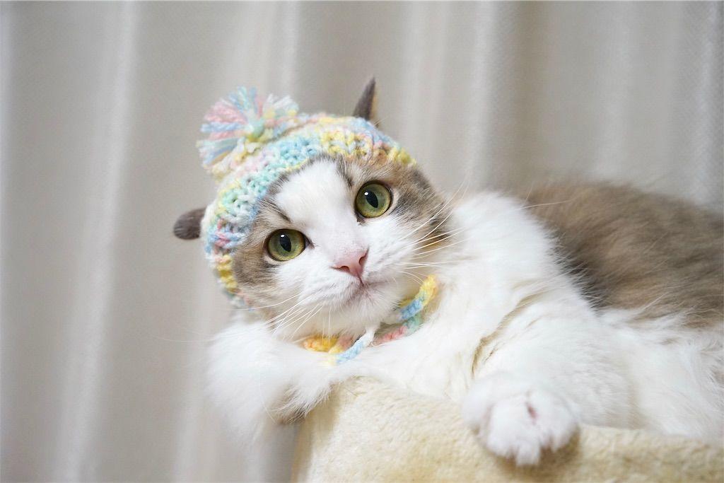 徒然猫屋さんの帽子を被った猫