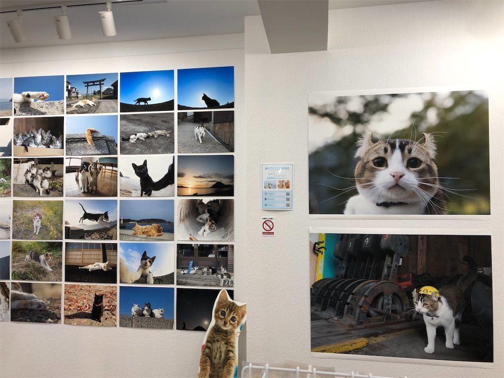 五十嵐健太さんの猫写真