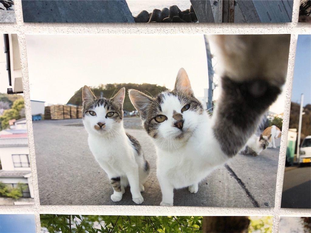 猫の自撮りのような写真