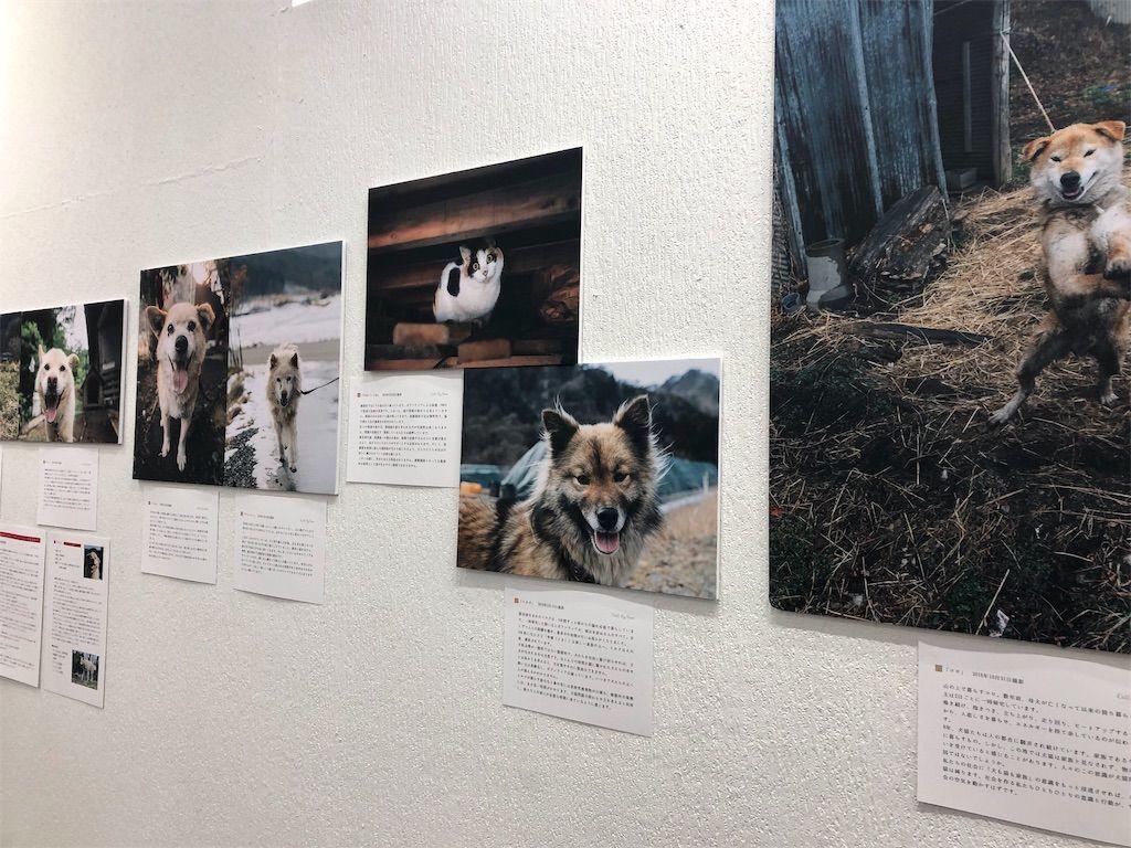 「原発被災地の犬猫たち」をテーマとした写真展示1