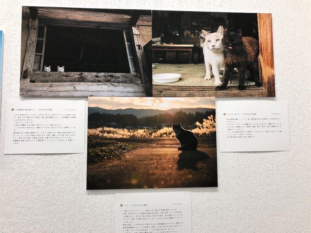 「原発被災地の犬猫たち」をテーマとした写真展示2