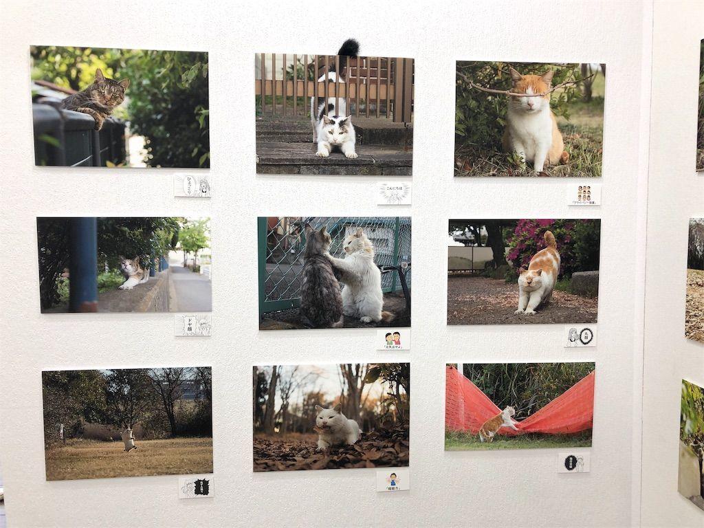 サトウヒロキさんの猫写真