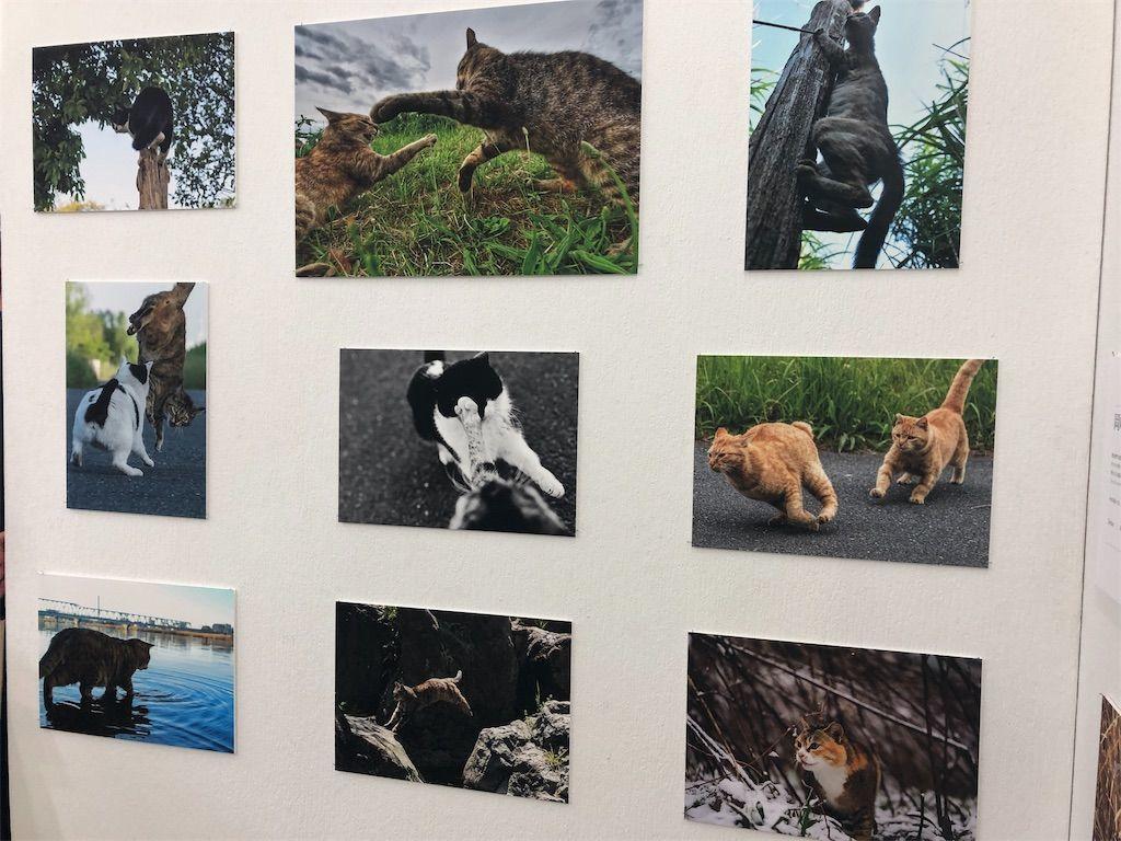 岡崎王子 as ネッコハンターの猫写真2
