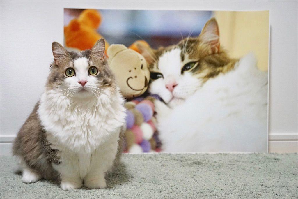 ねこ専 展示写真と愛猫リリーのツーショット
