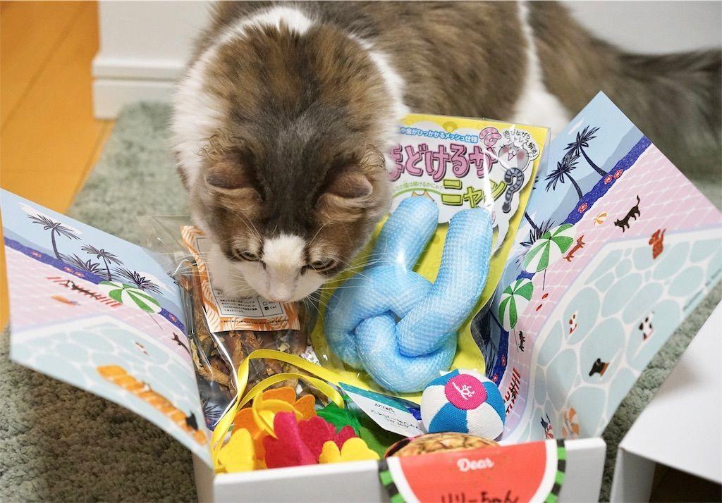 『PECOBOX for Cats ビーチリゾート』の中身1