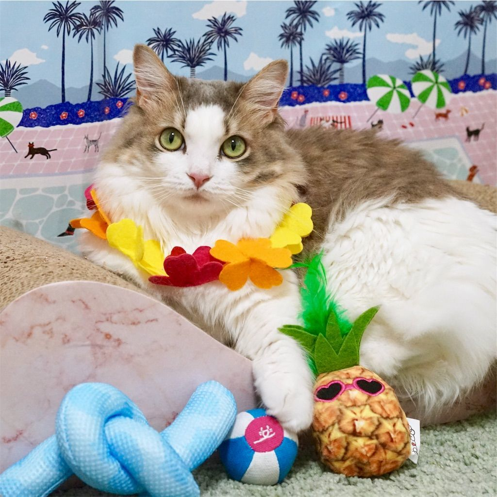 『PECOBOX for Cats ビーチリゾート』で愛猫と撮影