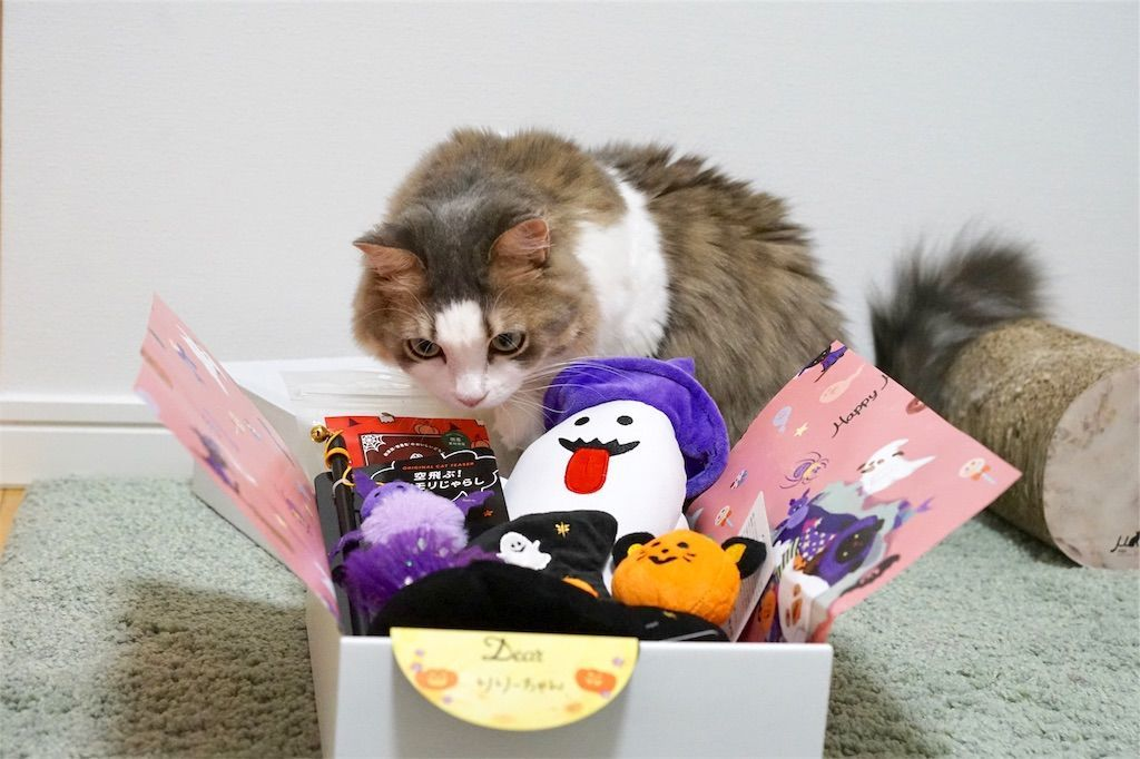 PECOBOX for Cats ハロウィン特別号の中身1