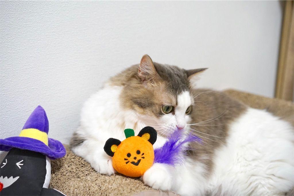 コロコロねずみカボチャと愛猫リリー