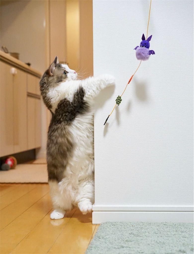 コウモリじゃらしを捕まえる猫