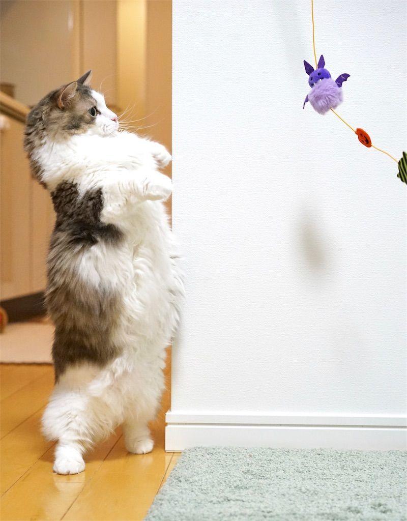 立っちする猫