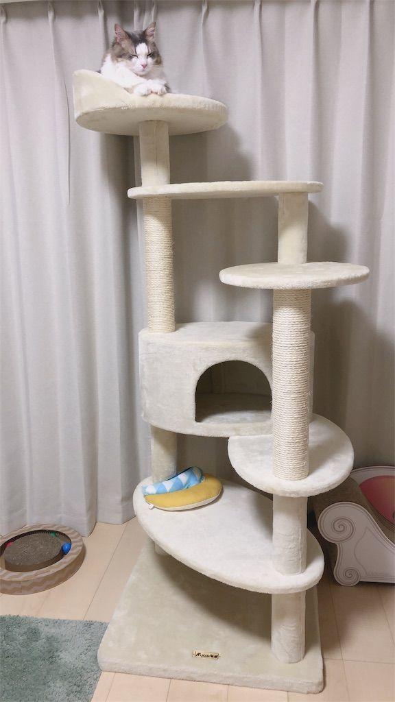 """キャットタワー最上階でくつろぐ猫"""""""