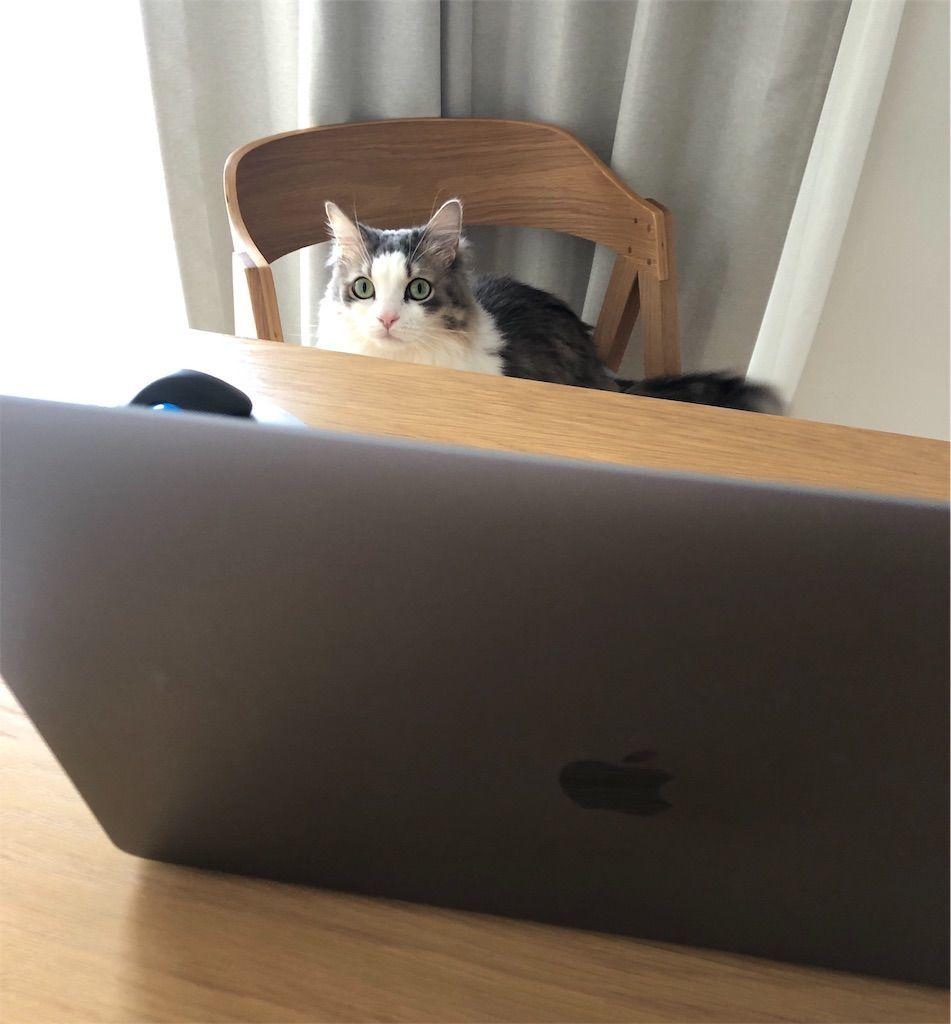 在宅勤務する猫