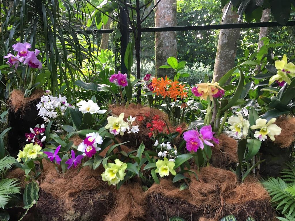 f:id:lily_singapore:20170410212213j:image