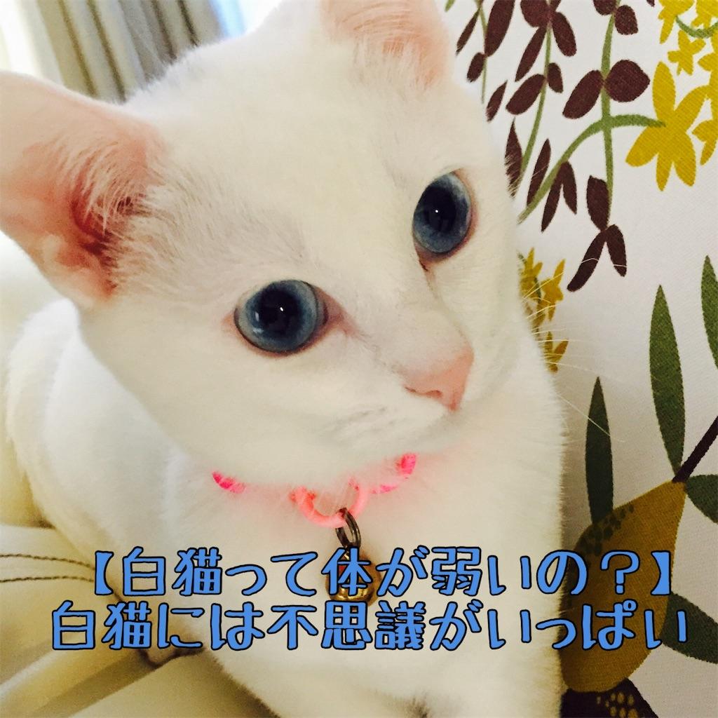 f:id:lilysa719:20170103112354j:image
