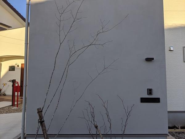 アオダモ 外構 植栽
