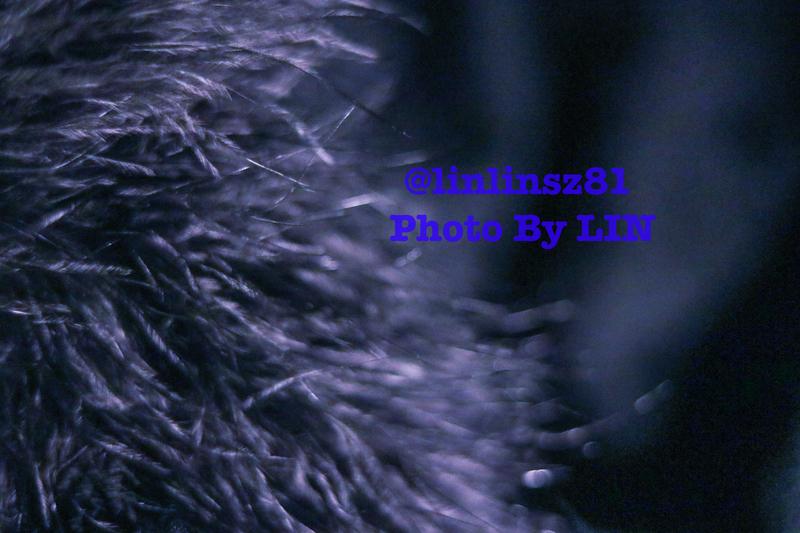 f:id:linlinsz81:20200213230005j:plain