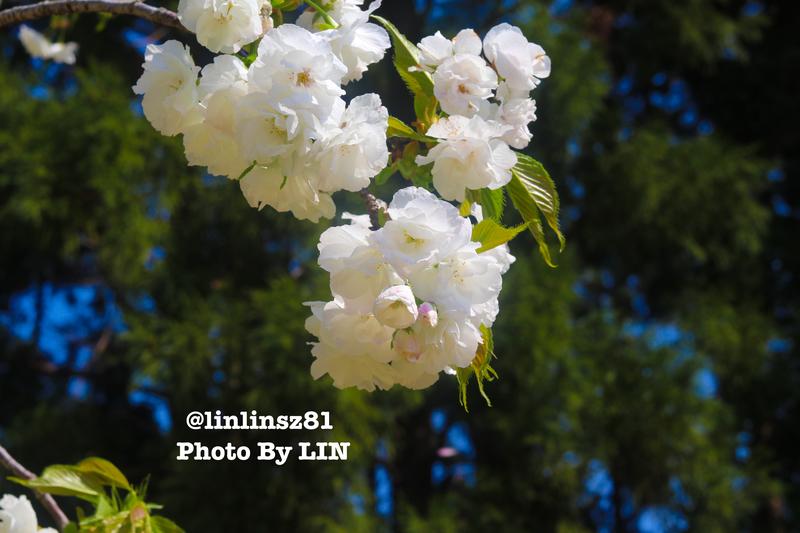 f:id:linlinsz81:20200411003721j:plain