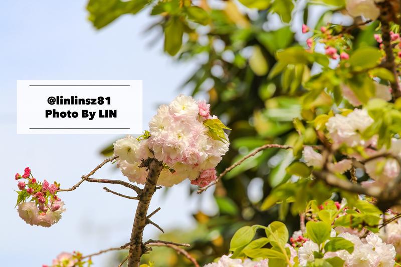f:id:linlinsz81:20200411005938j:plain