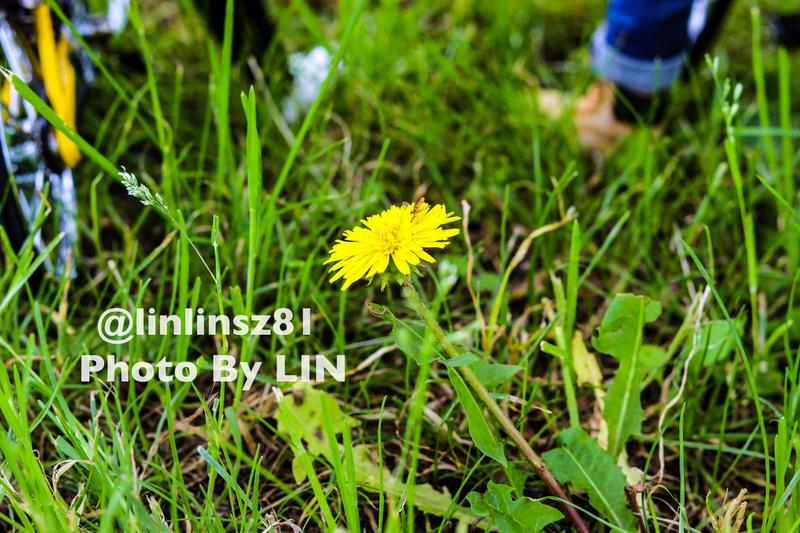 f:id:linlinsz81:20210625174012j:plain
