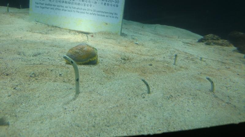 高雄観光屏東水族館2