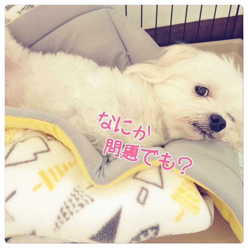 f:id:linum-yoshi:20190820234247j:image