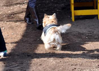 f:id:lion-dog:20100223110514j:image