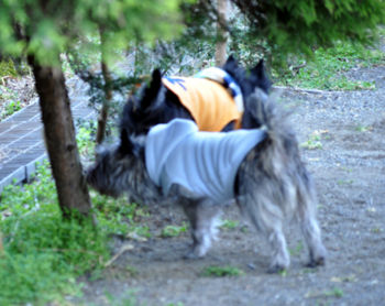 f:id:lion-dog:20100223112552j:image