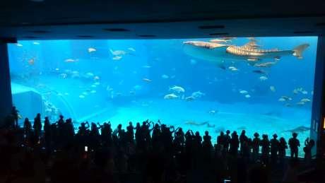 巨大水槽とジンベエザメ