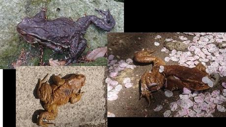 自然のカエルたち