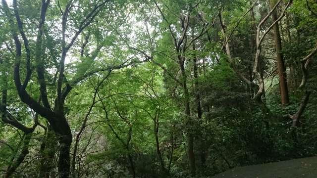 自然豊かな奥社の道のり