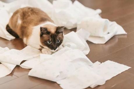 トイレットペーパーを散らかすネコ