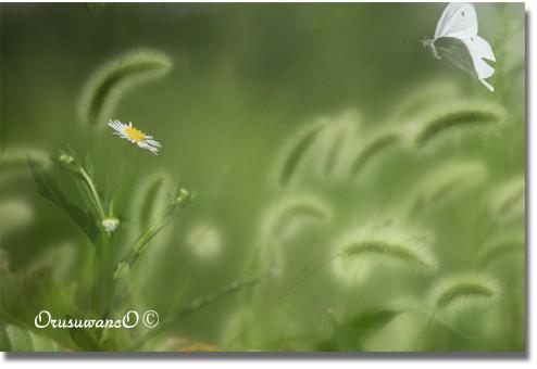 f:id:little_green:20120920143435j:image:w360