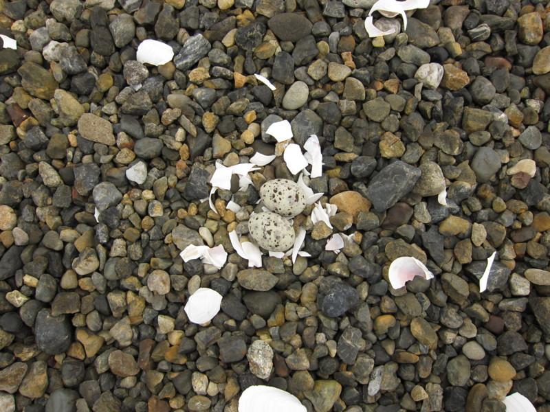 f:id:littletern:20110626111701j:image:w640