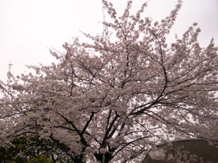 f:id:live-sokabe:20090404115325j:image